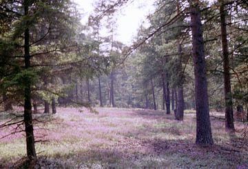 In Wald und Heide van Joachim Serger