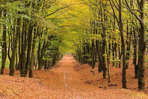 Herfstbos bij Hoog Buurlo