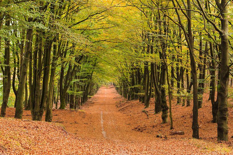 Forêt d'automne à Hoog Buurlo sur Joop Gerretse