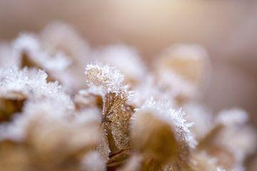 frost auf welken blumen von