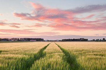 Landschap met Korenveld van Frank Peters