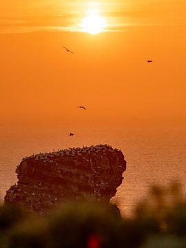 lange anne, zonsondergang van Henri van Rheenen