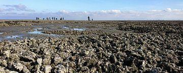 Waddenzee bij eb met oesterbanken van