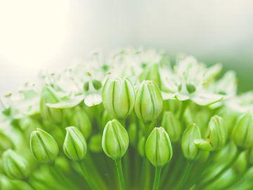 Grüne und Weiße von Miriam Meijer, en plein campagne.....