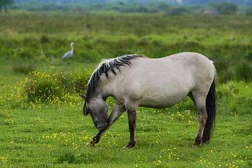Paard op Lentevreugd van Dirk van Egmond