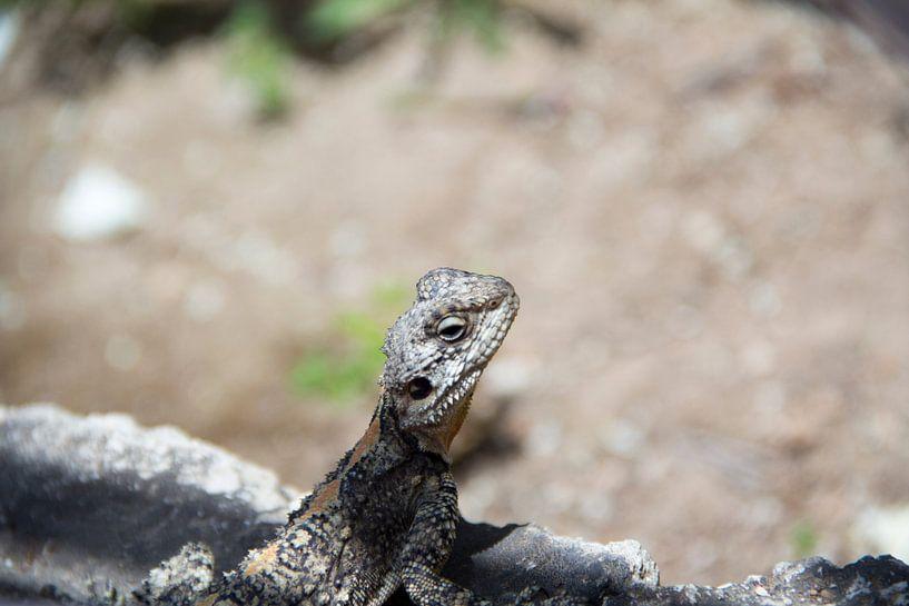 Salamander von Daniël Smits