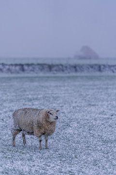 Winter op Texel van Texel360Fotografie Richard Heerschap