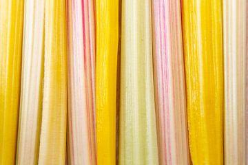 Patroon van Regenboog snijbiet van Hilda Weges