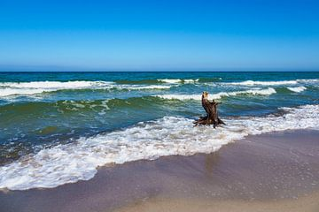 Trunk on the Baltic Sea coast sur
