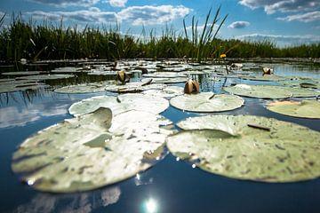 Seerose auf widerspiegelnder Wasseroberfläche mit weißen Wolken von Fotografiecor .nl