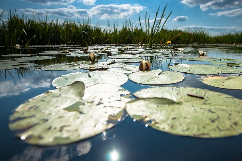 Waterlelie op spiegelend wateroppervlak met witte wolken van Fotografiecor .nl