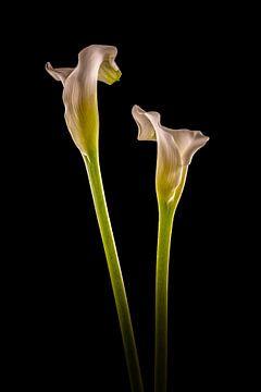 Callas 2 in kleur