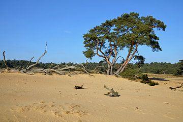 Voler sur une dérive de sable contre un ciel bleu clair dans le parc du Hoge Veluwe