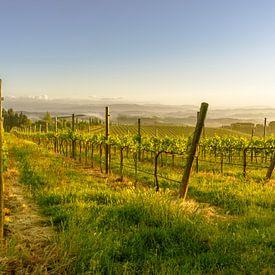 Printemps dans un vignoble toscan sur Tony Buijse