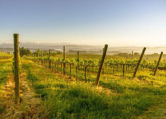 Lente in een Toscaanse wijngaard van Tony Buijse