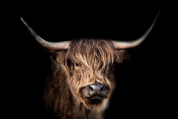 Schottischer Highlander von Gert Hilbink
