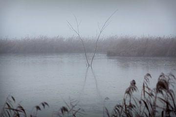 Friesland in de mist aan de Tjonger van Rene  den Engelsman