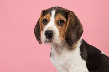 Porträt eines Beagle-Welpen von Elles Rijsdijk
