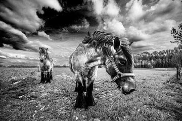 HDR Paarden in de Wei van Brian Morgan