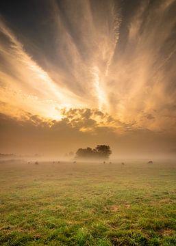 Explosie van licht van Ard Jan Grimbergen