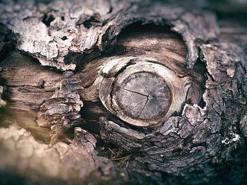 Ds Auge im Baumstumpf van Dirk Bartschat