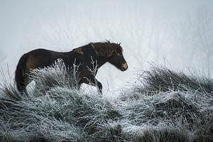 Winter paard van