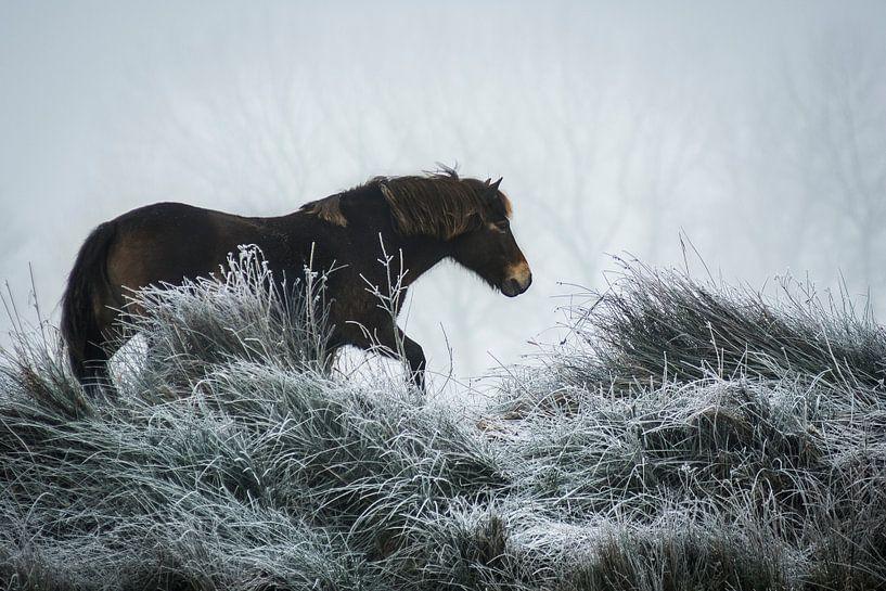 Winter horse von AnyTiff (Tiffany Peters)