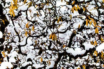 Winterworms van Marieke van der Doef