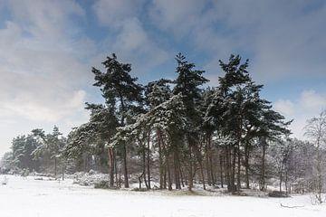 Winterlandschap van Anton de Wolff