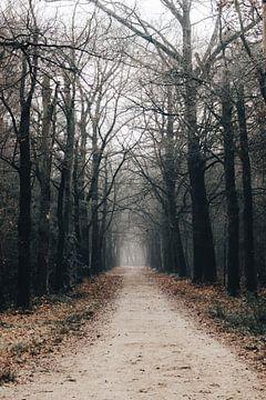 Launischer Wald von Eveline Gijsbers