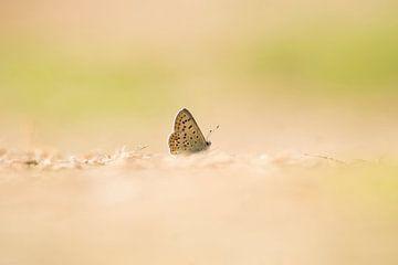 Schmetterling von Marian Le Pair - van Os