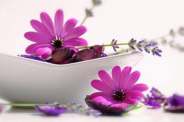 flowers Potpourrie sur Tanja Riedel