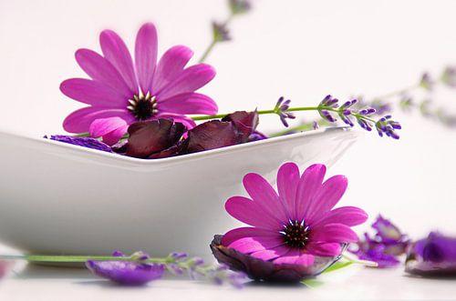 Blumen Potpourrie