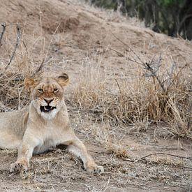 Löwe von Robert Styppa