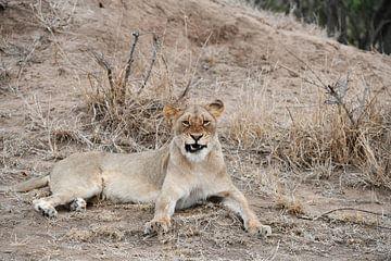 leeuw van Robert Styppa