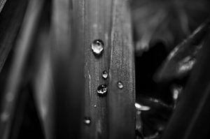 Schwarz-Weiß-Makroaufnahme eines Blattes mit Wassertropfen