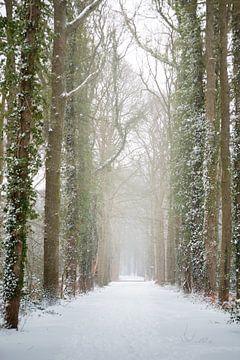 Waldweg im Winter, mit Schnee bedeckt | Fine Art Photo Print von Karijn Seldam