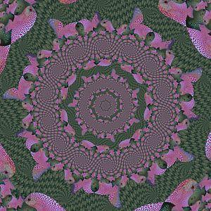 Cirkels van Spiralen van Tropische Vissen III