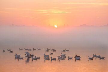 Zonsopkomst met vogels van Peet Romijn