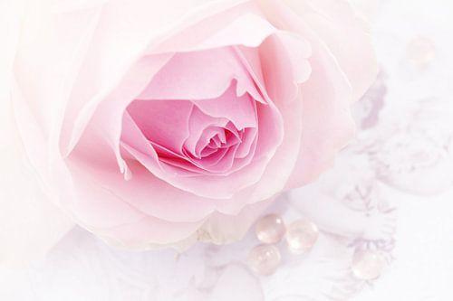 Soft rose van LHJB Photography