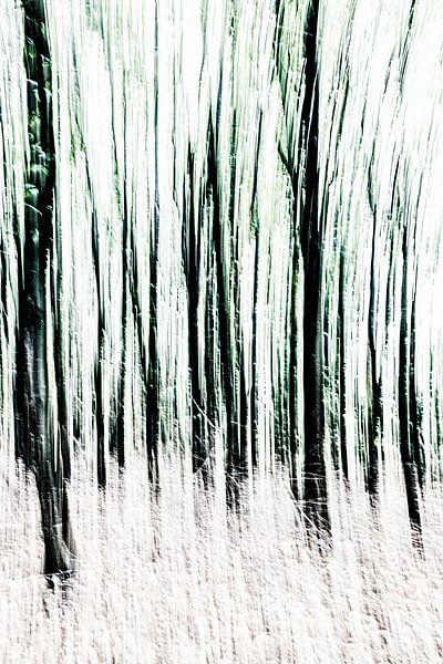 Bomen van Dick Jeukens