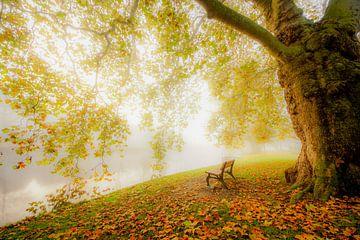 Romantischer Wald in Leiden von Dirk van Egmond