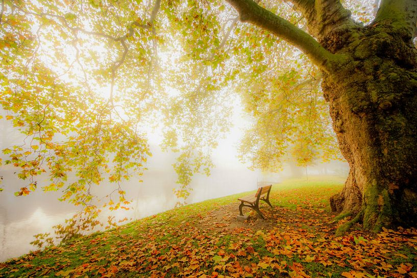 Romantisch bos in Leiden van Dirk van Egmond