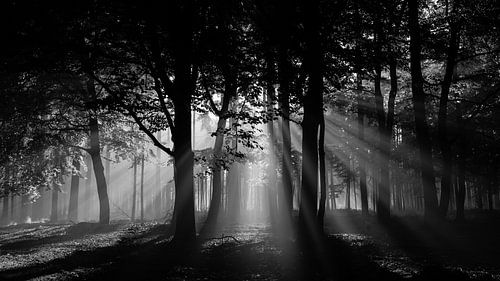 Zonnestralen in het bos (zwartwit) van