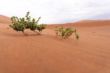 Miniatuur bos van Jeroen de Weerd