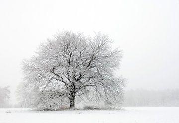 Boom in sneeuwlandschap von Michiel Wijnbergh