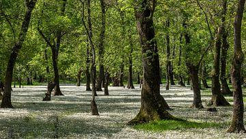 Bäume im Sumpf von Daan Kloeg