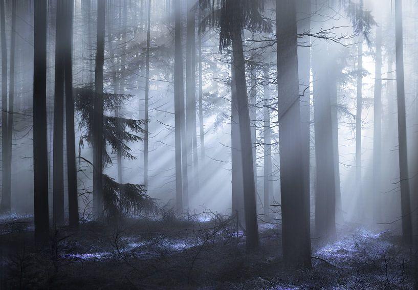 The fairy forest van Rob Visser