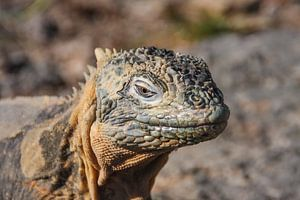Godzilla, Galapagos van