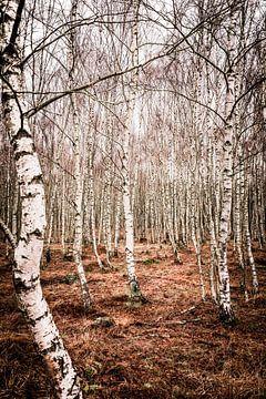 Forêt de bouleaux (1) sur Mayra Pama-Luiten